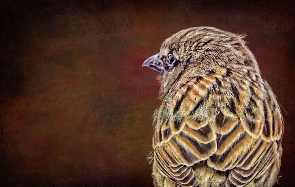 Lyndia Radice: Sparrow