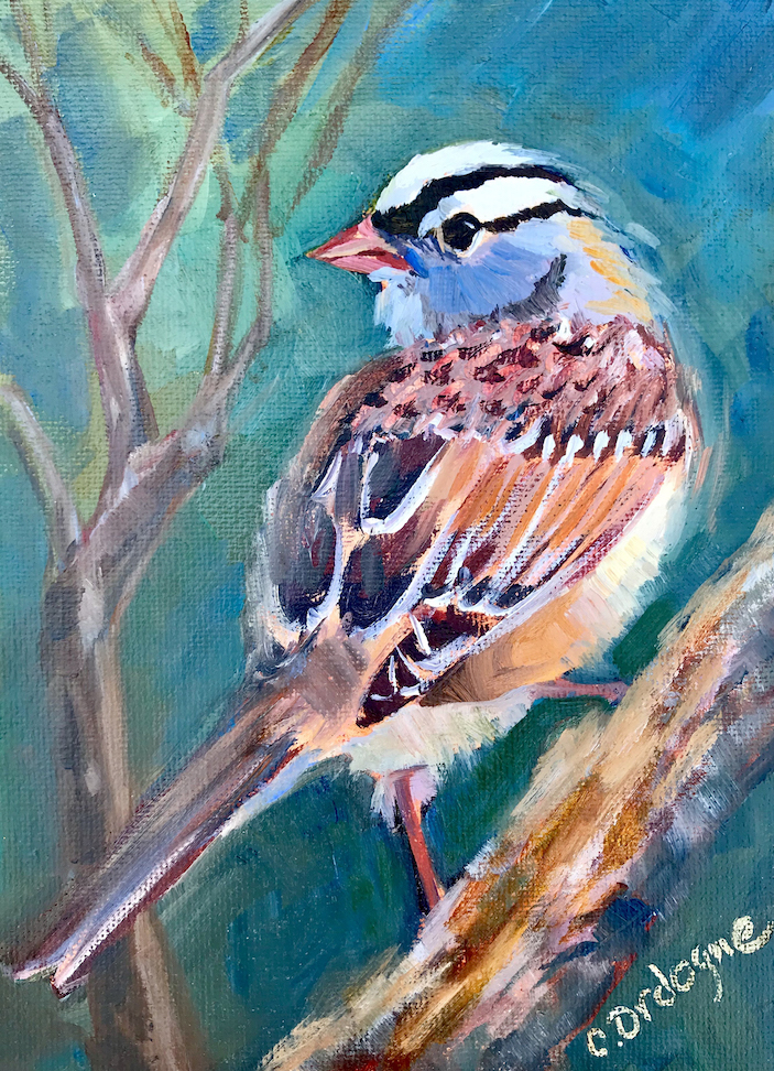 Carol Ordogne: White Crowned Sparrow