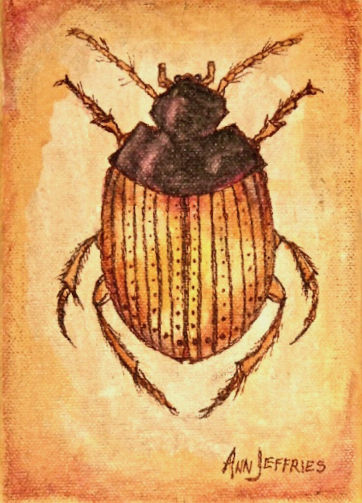 Ann Jeffries: Beetle (Coleoptera)