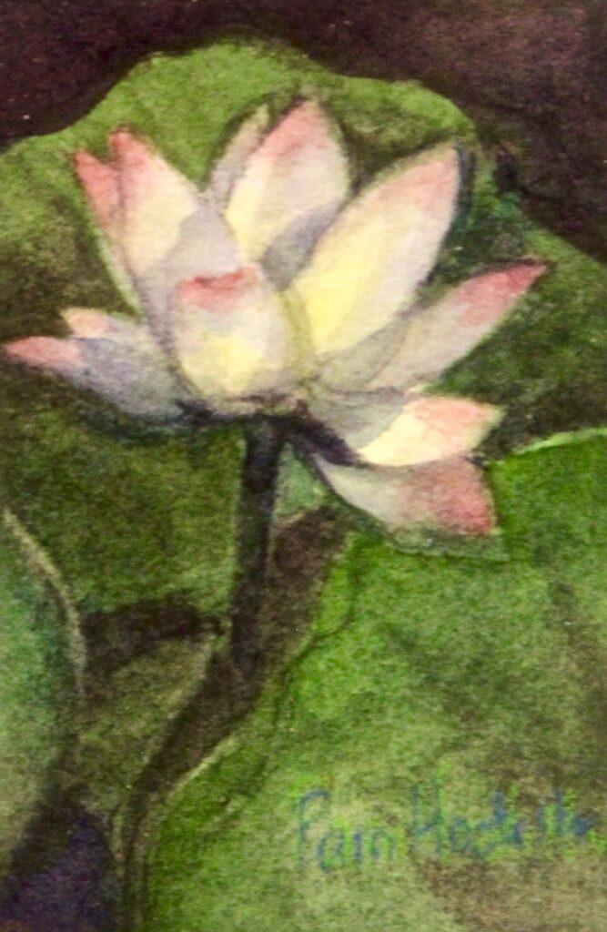 Pam Hostetler: Lotus