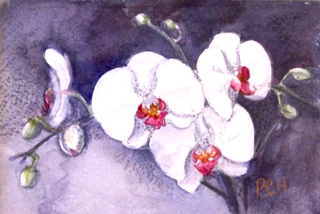 Pam Hostetler: Orchid