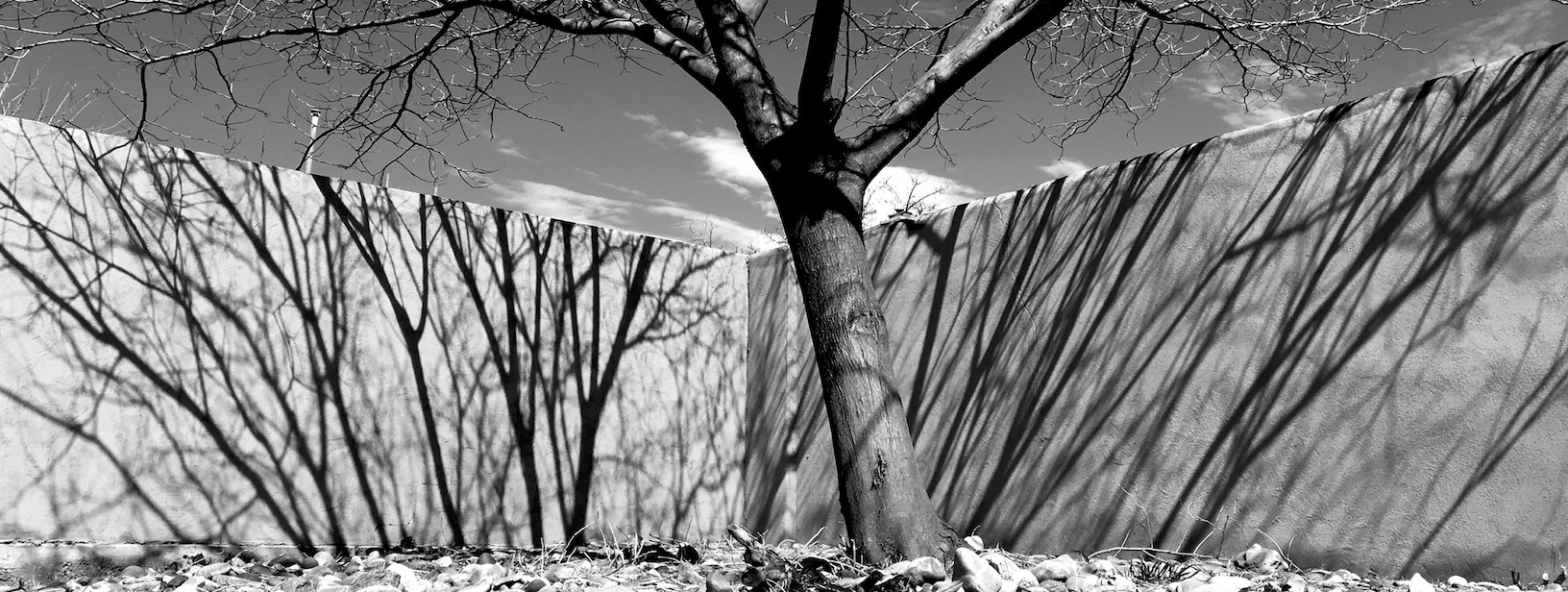 Dan Shaffer: Tree and Wall