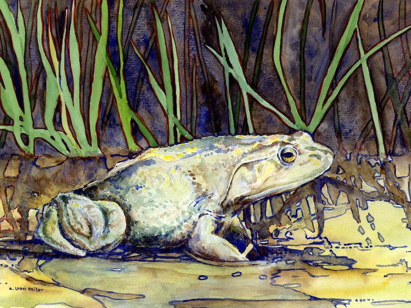 A. Leon Miler: Bullfrog