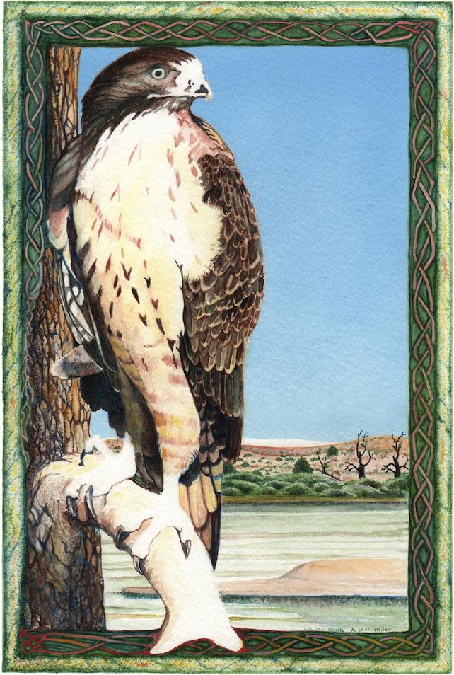 A. Leon Miler: Redtail Hawk