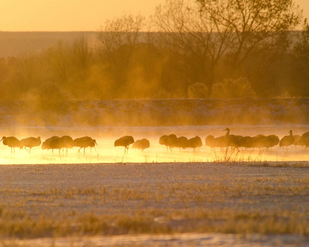 Ralph Lind: Cranes in the Mist