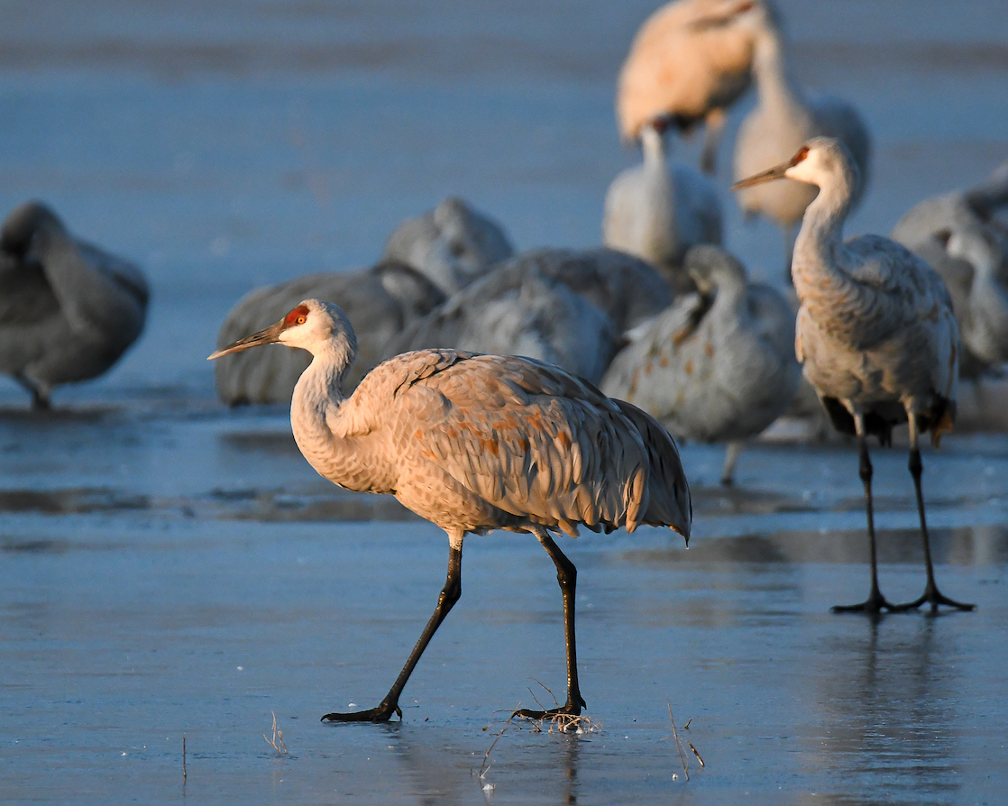 Ralph Lind: Cranes on Ice