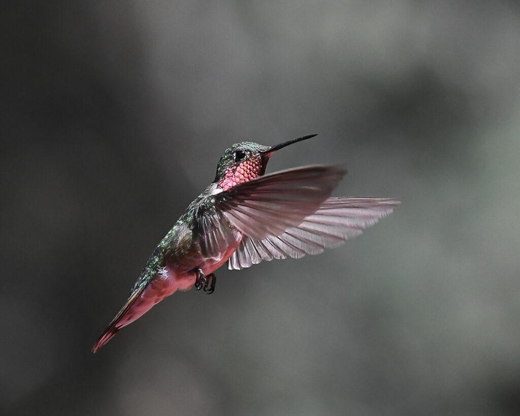 Ralph Lind: Hummingbird Pose