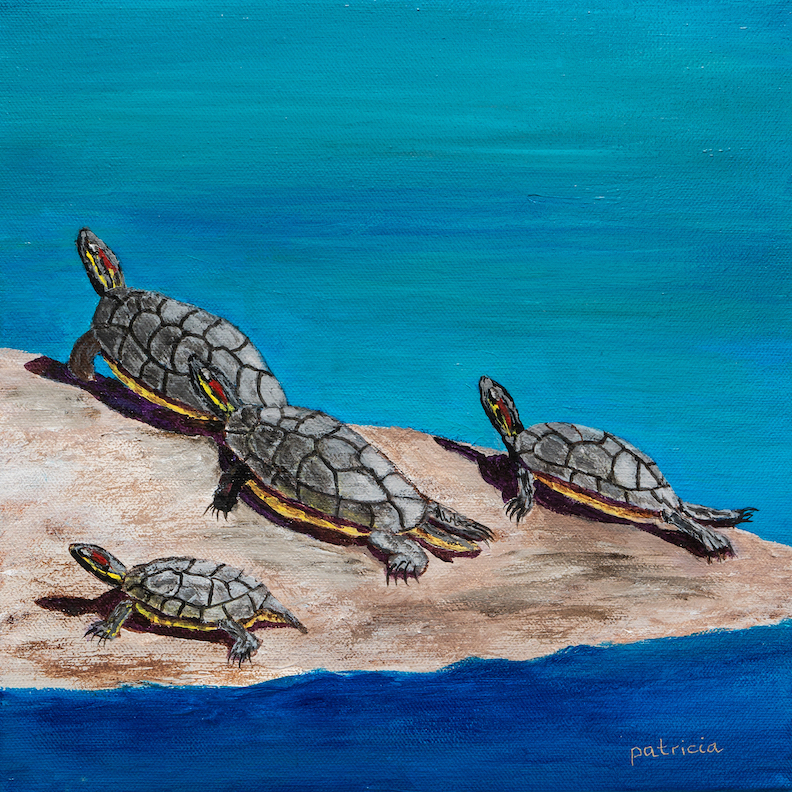 Patricia Gould: Tortugas Tranquillas