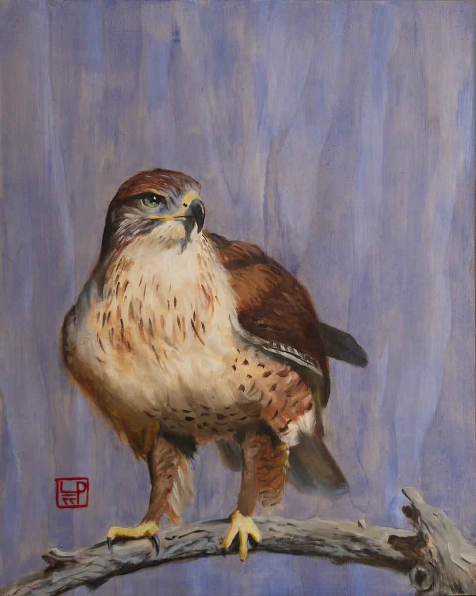 Lynne Patton: Red-tailed Hawk