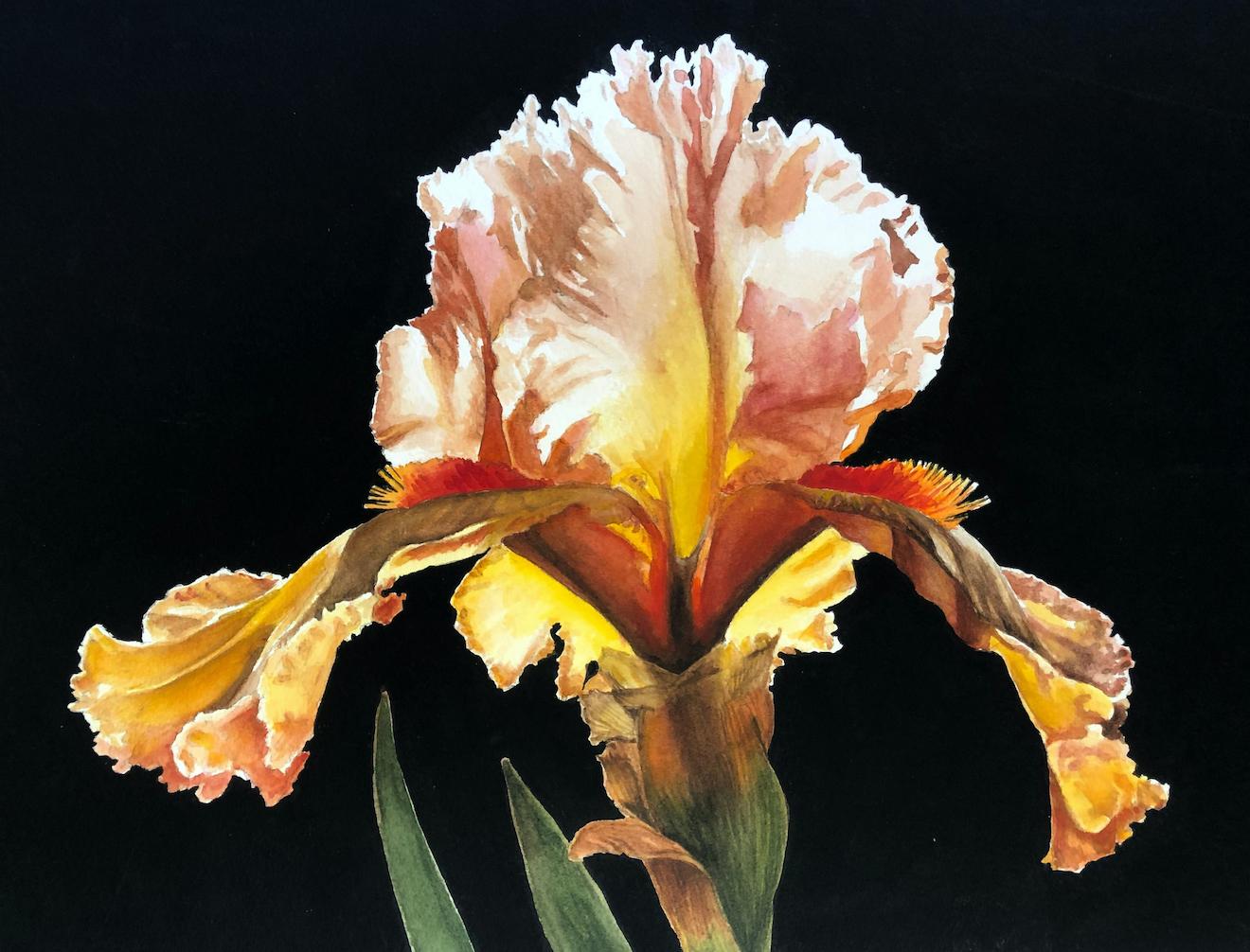 Penny Thomas Simpson: Sunset Iris