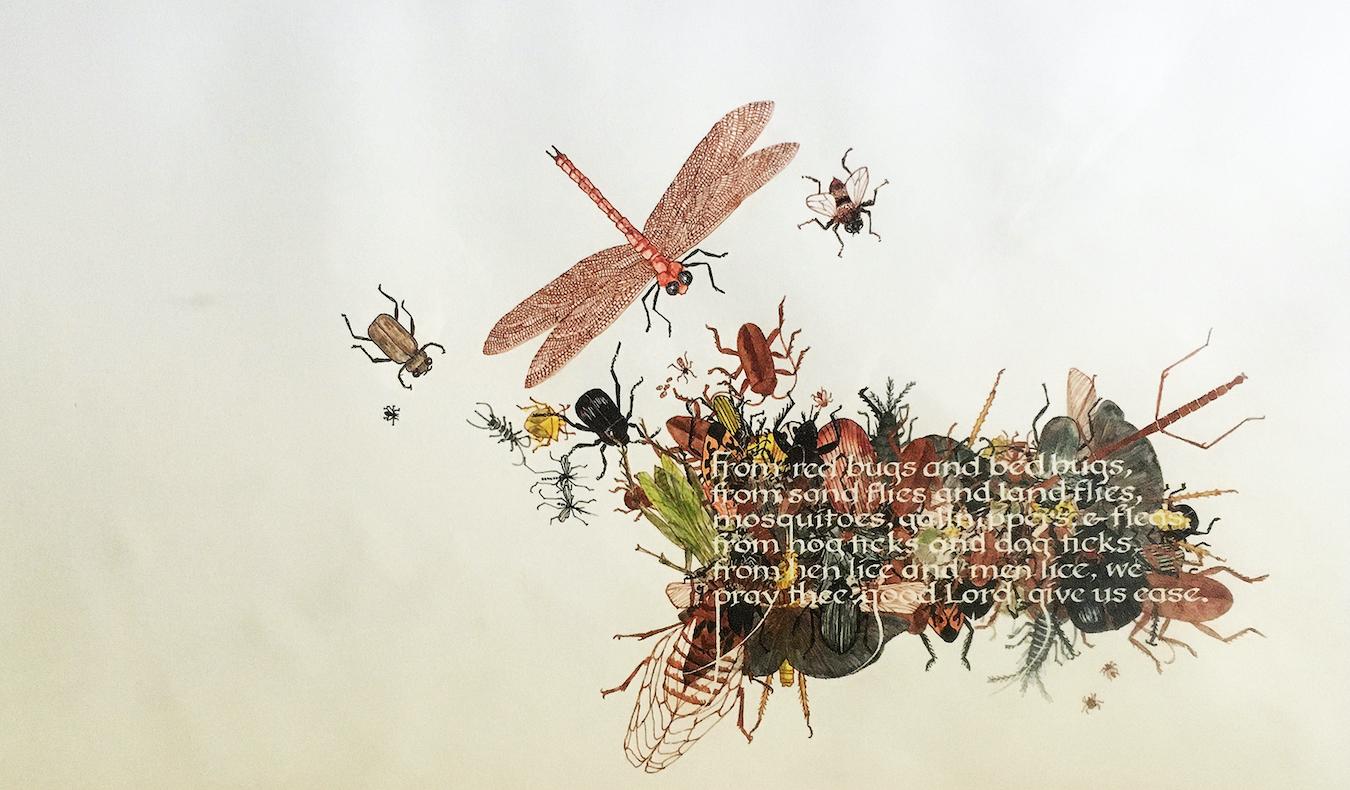 Kathy Chilton: Bugs