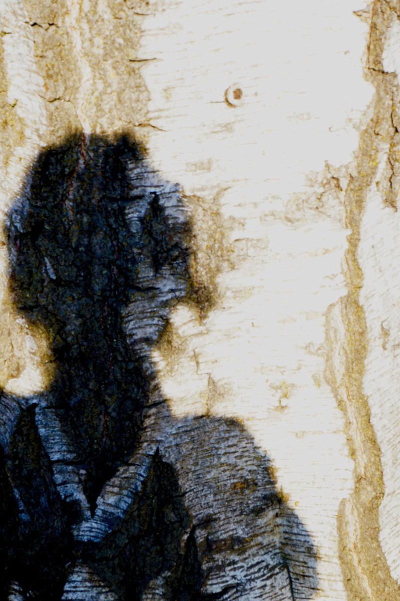 Irene Garden - Shadow Series: Bark Woman
