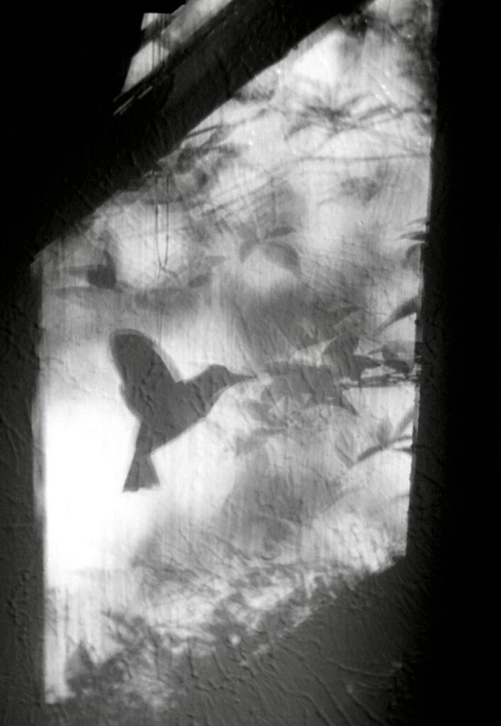 Irene Garden - Shadow Series: Shadow In Flight