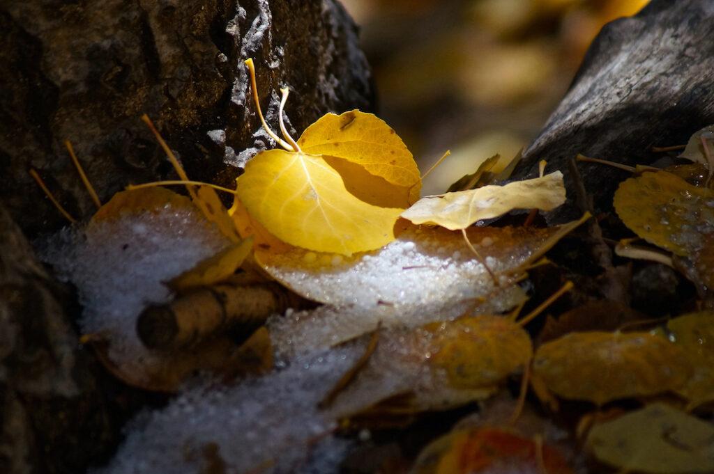David D. Sorensen: Aspen Snow Dusting