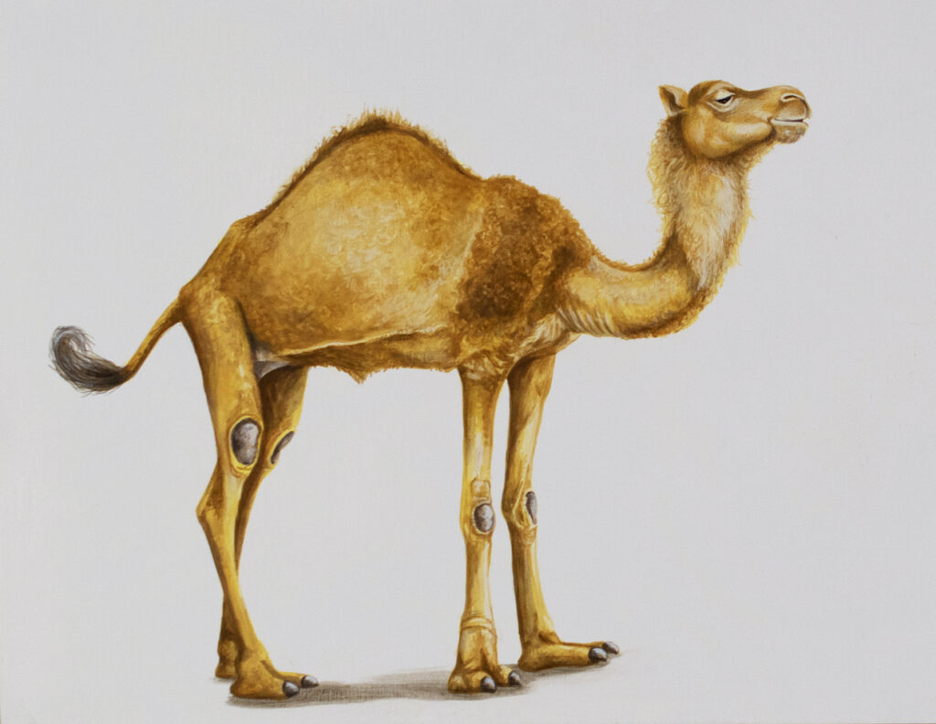 Tricia George: Camel Posing