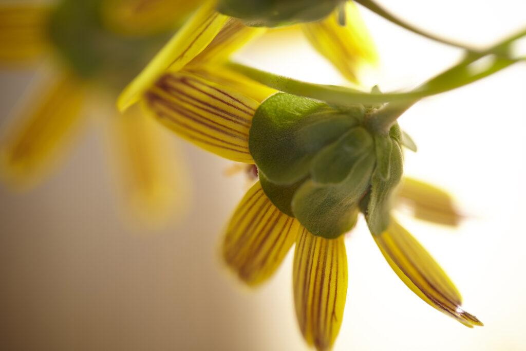 Kevin Black: Chocolate Flower