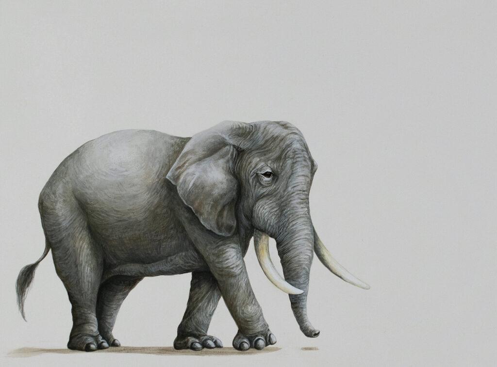 Tricia George: Elephant Walking