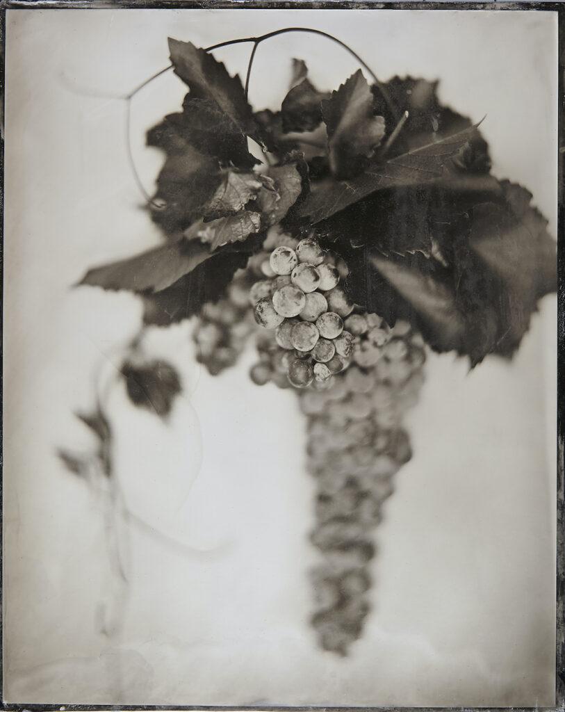 Kevin Black: Grapes II