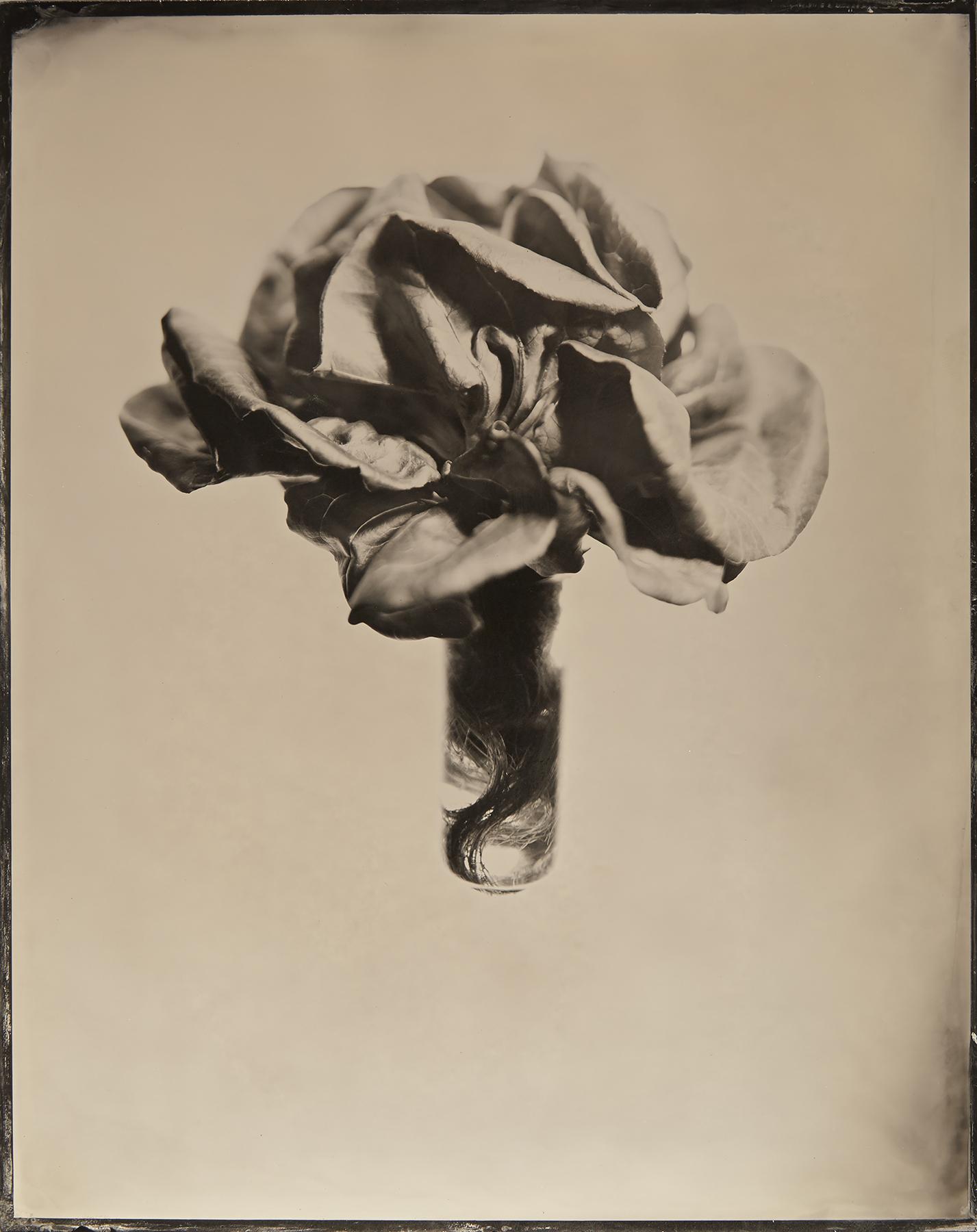Kevin Black: Lettuce Bouquet