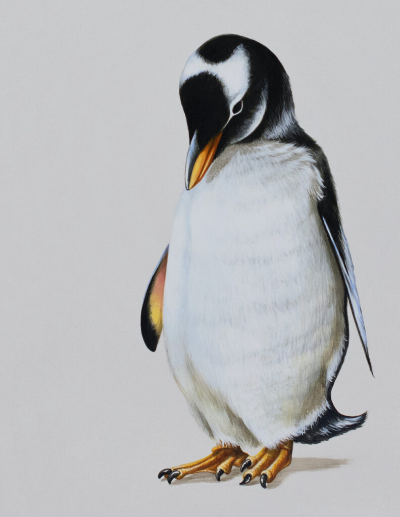 Tricia George: Penguin Reflecting