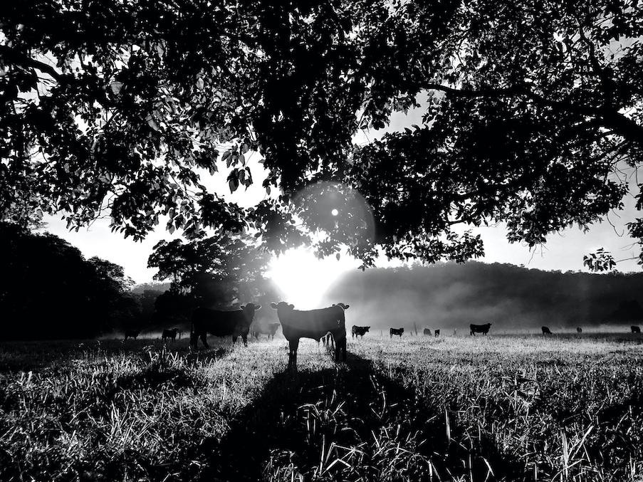 David D. Sorensen: Solar Cow