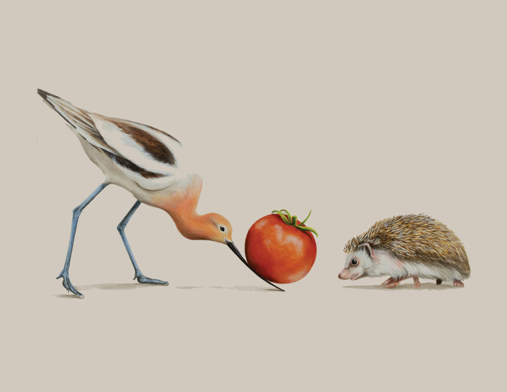 Tricia George: The Avocet and The Hedgehog