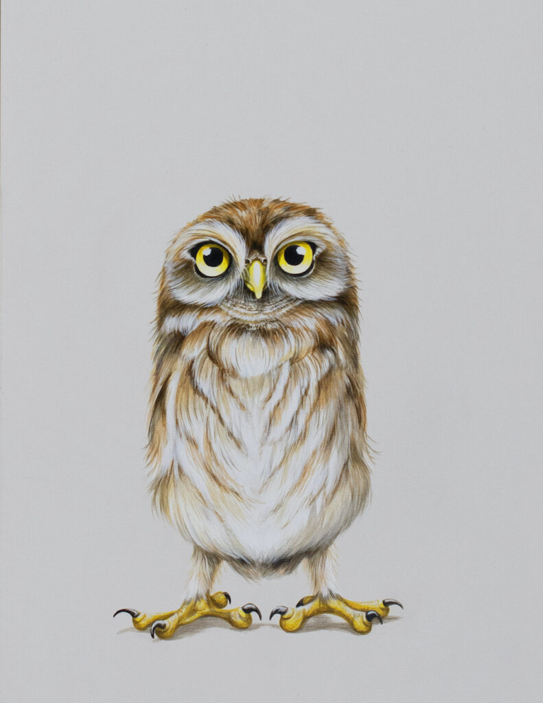 Tricia George: The Burrow Owl