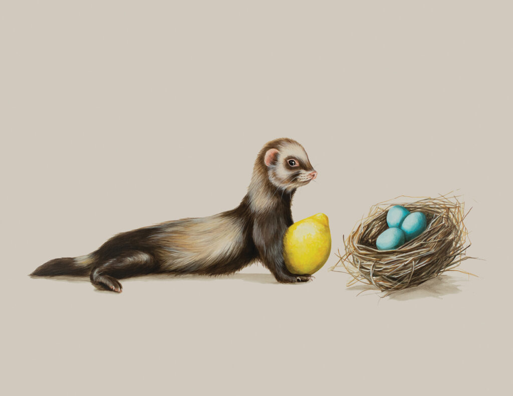 Tricia George: The Ferret and The Three Blue Eggs