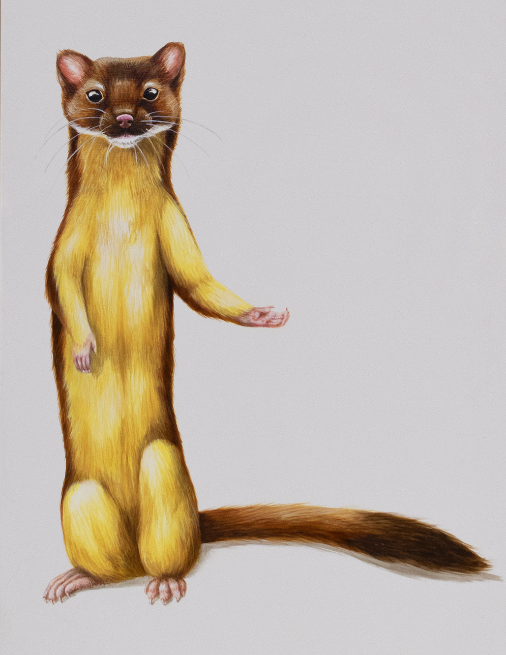 Tricia George: The Long-Tailed Weasel