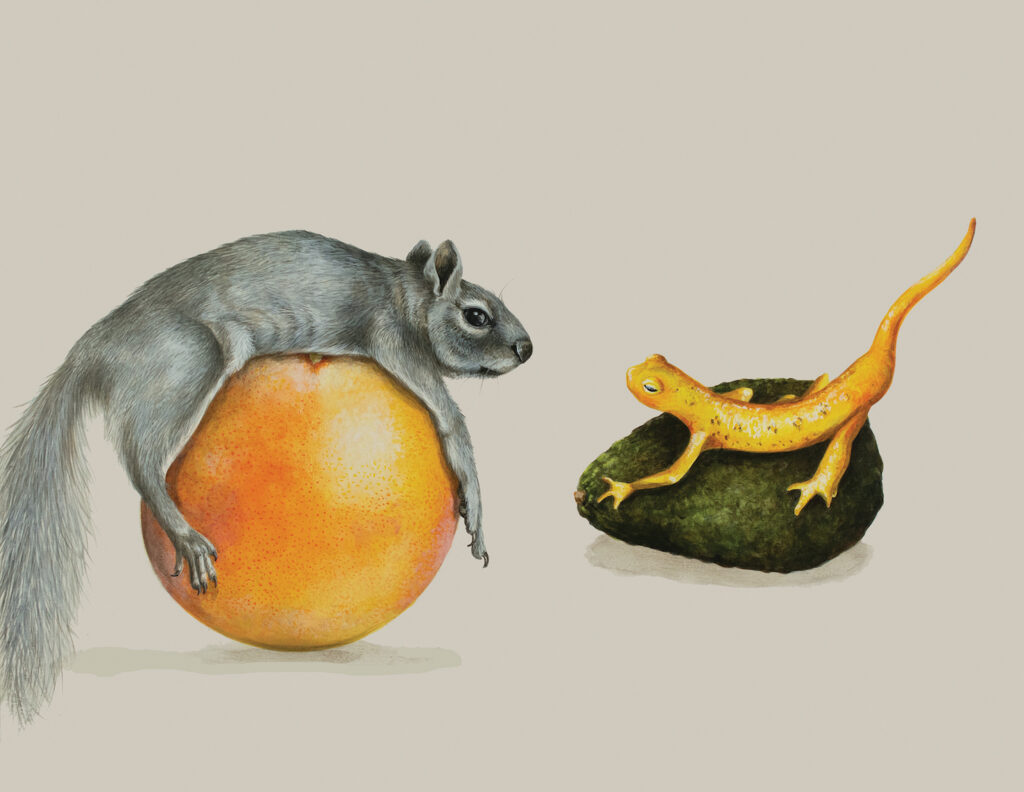 Tricia George: The Squirrel and The Newt