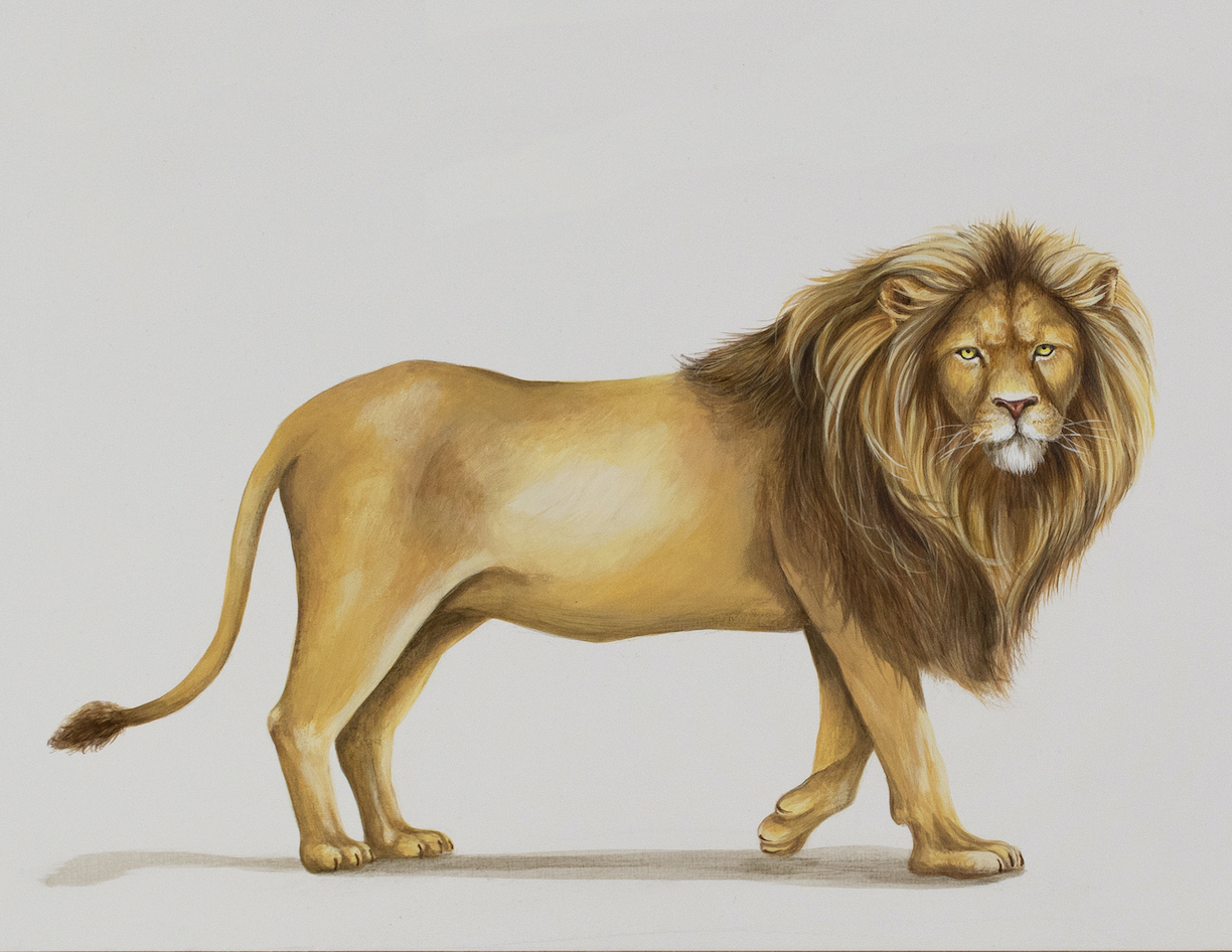 Tricia George: The Young Lion
