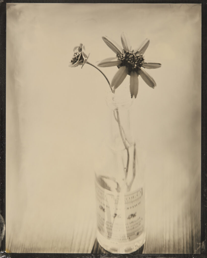 Kevin Black: Chocolate Flower & Bottle