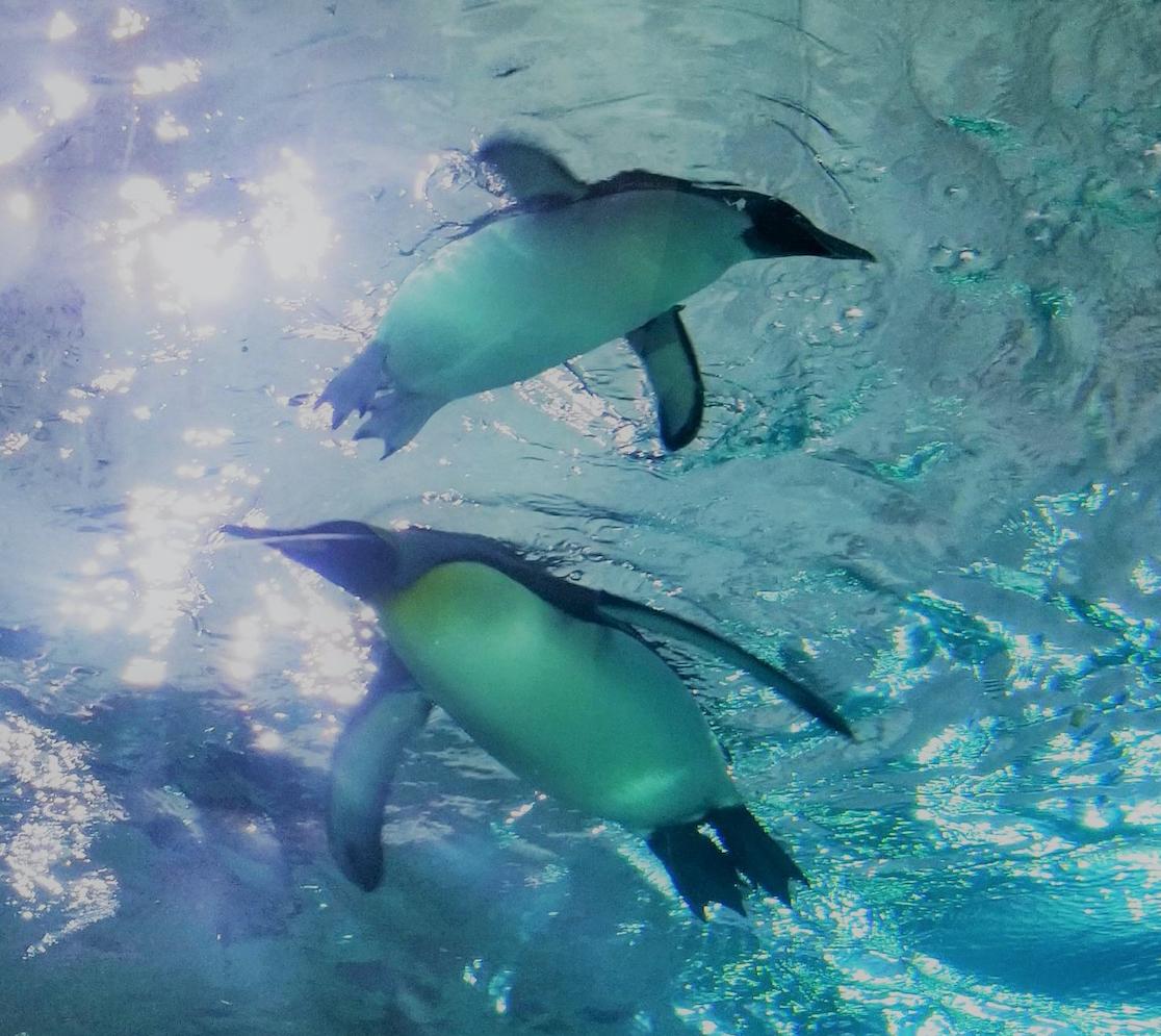Jen Jaciw: Penguin Pair