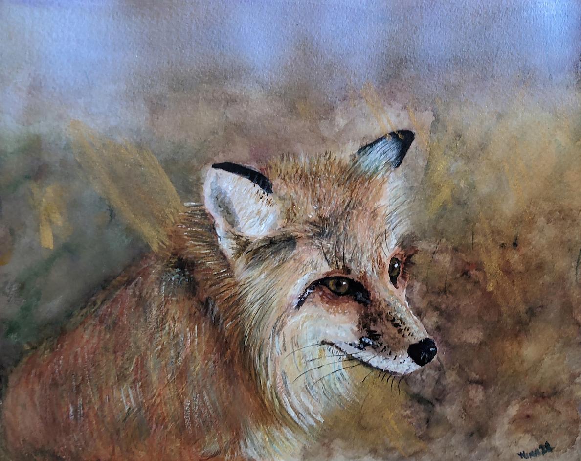 Penny Winn: Fox Portrait