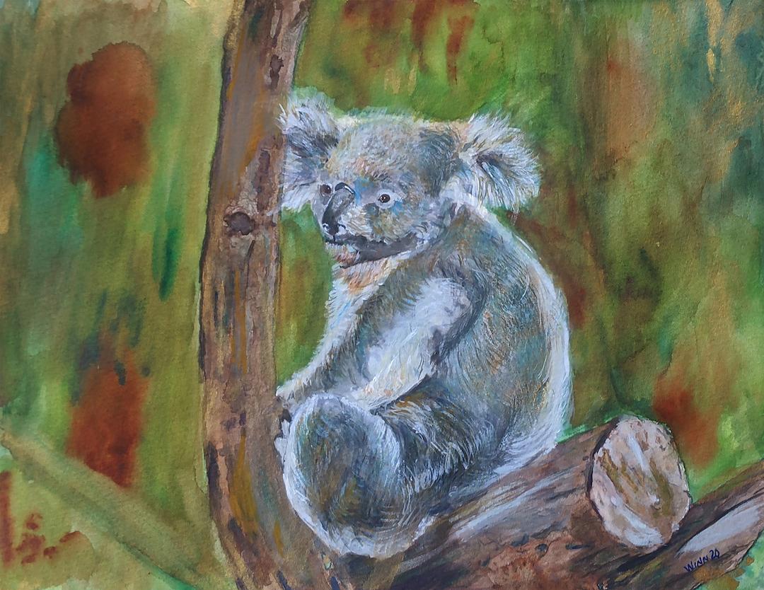 Penny Winn: Koala