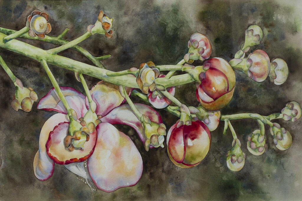 Mary Moser-Perkins: Cannonball Flower