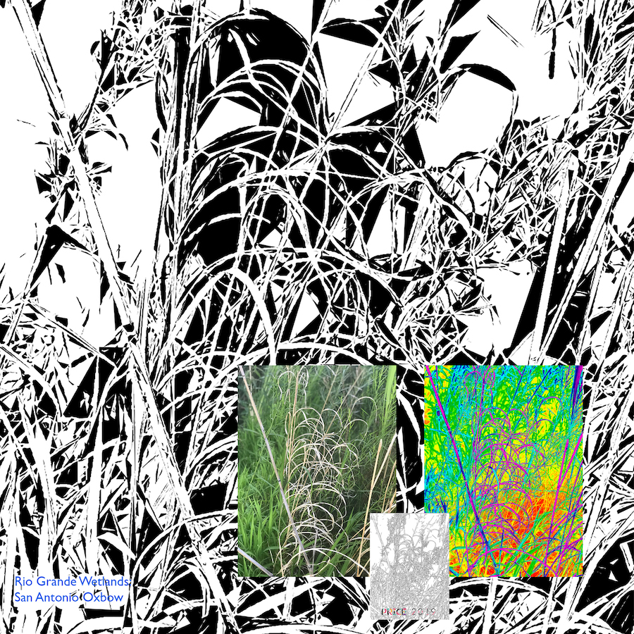 Jonathan Reeve Price: The Rio Grande Wetlands; Dry Reeds