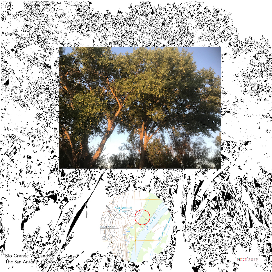 Jonathan Reeve Price: The Rio Grande Wetlands; Tree Glow