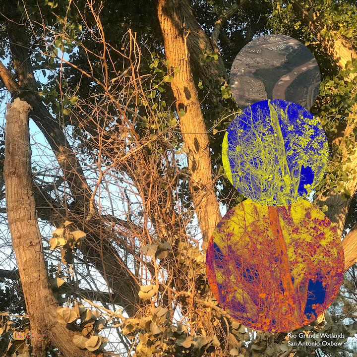 Jonathan Reeve Price: The Rio Grande Wetlands; Trees at Dawn
